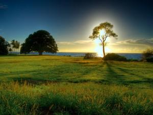 El sol tras un gran árbol