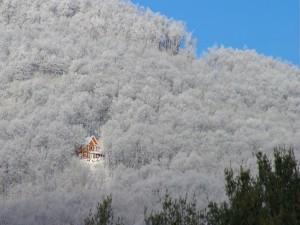 Postal: Una casa entre árboles blancos