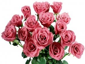 Postal: Rosas de color rosa en un ramo