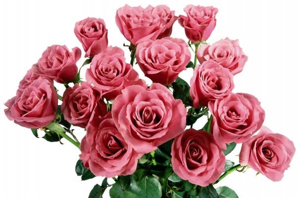 Rosas de color rosa en un ramo