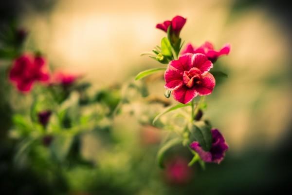 Unas lindas flores creciendo en la planta
