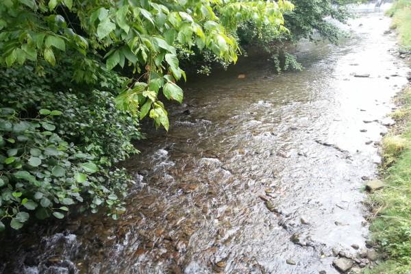 Río casi sin agua en verano