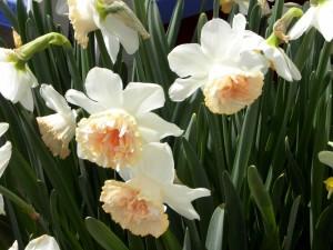 Postal: Flores blancas con largas hojas verdes