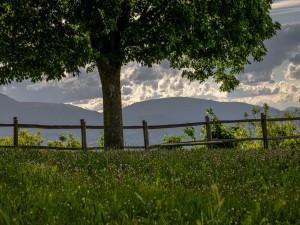 Postal: Hierbas y flores bajo un gran árbol