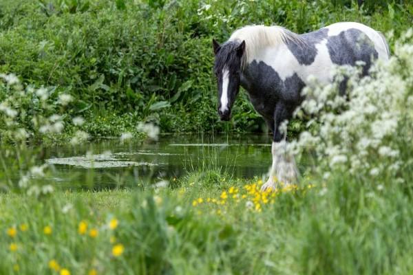 Caballo en la hierba junto a un estanque