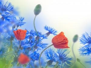Bella composición floral con amapolas