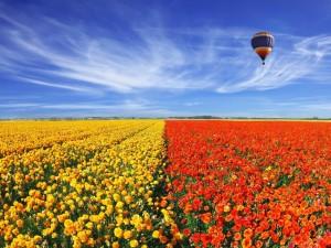 Globo volando sobre un campo sembrado de coloridas flores