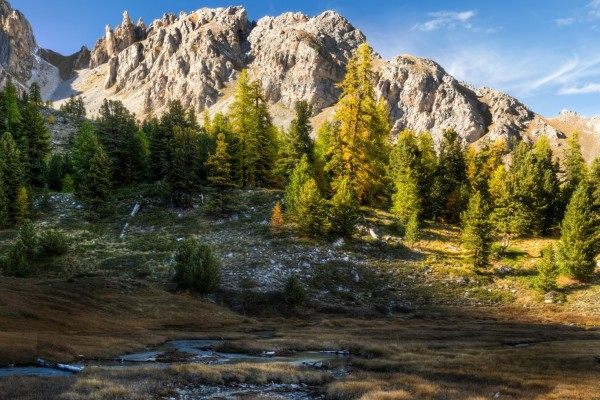 Frondosos pinos en la ladera de la montaña