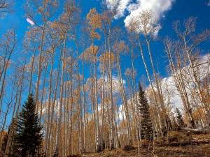 Magníficos y altos árboles en otoño