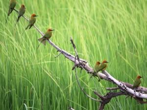 Pajaritos con pico largo y fino posados en una rama