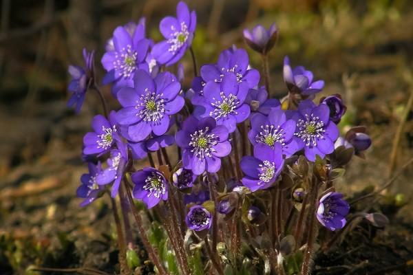 Espectaculares flores violetas en el suelo