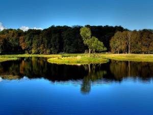 Postal: Un árbol en la isleta del lago