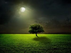Un solitario árbol bajo la luz de la luna