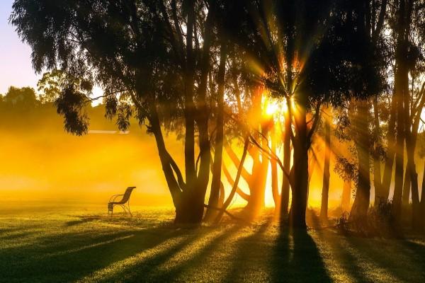 En una mañana de verano el sol penetra entre los árboles