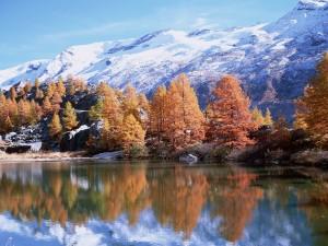 Árboles otoñales junto a la montaña y el lago