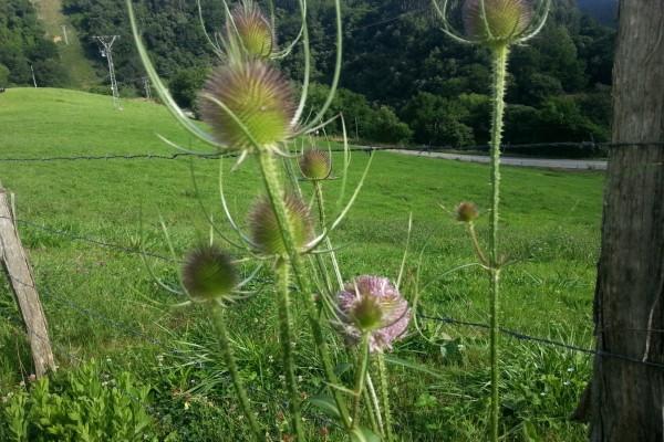 Flores junto a la alambrada
