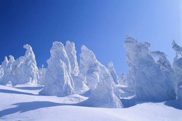 Una gruesa capa de nieve cubriendo los árboles