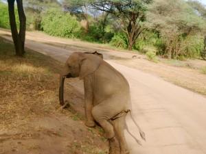 Postal: Un pequeño elefante saliendo del camino