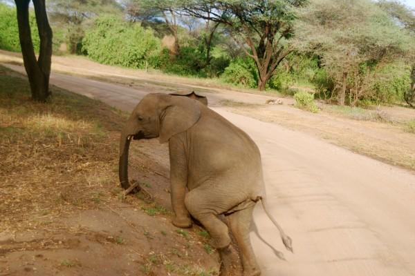 Un pequeño elefante saliendo del camino
