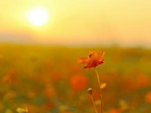 Los rayos del sol iluminan una tierna flor naranja