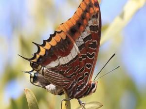 Bella mariposa posada sobre un planta