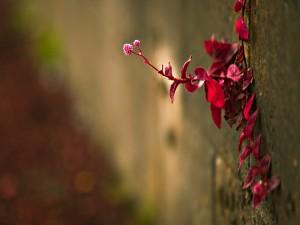 Postal: Planta con hojas rojas