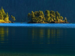 Árboles en las isletas del lago