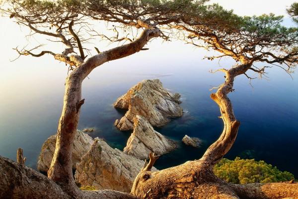 Árbol y rocas junto al agua