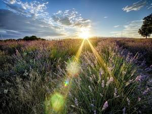 Postal: El brillante sol iluminado el campo