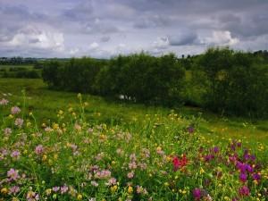 Postal: Campo con lindas flores