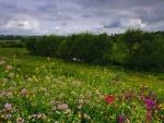 Campo con lindas flores