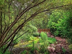 Un puente con escaleras entre la naturaleza