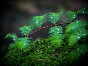 Hojas verdes en la rama con pequeñas gotas de agua