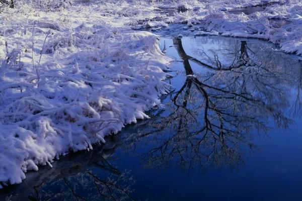 Plantas cubiertas de nieve en la orilla del río
