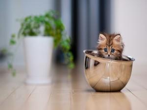 Postal: Un gatito dentro de un cuenco de metal
