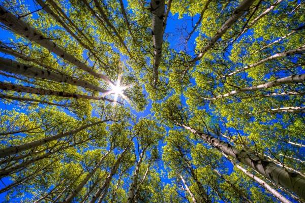 El sol iluminando las copas de los árboles