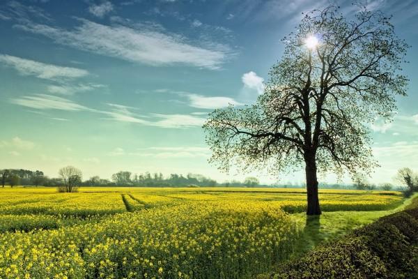 Un brillante campo con árboles y flores
