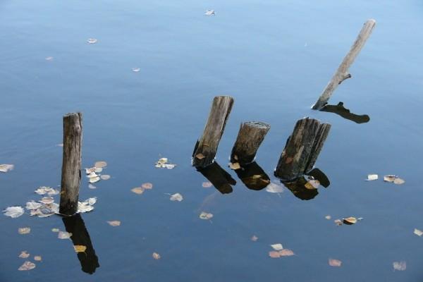 Hojas y troncos en el agua