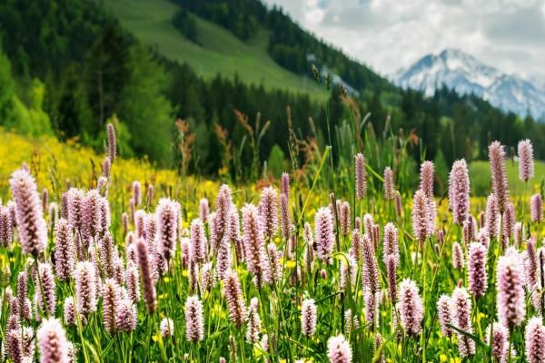 Bellas flores entre la hierba