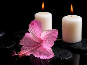 Postal: Dos velas blancas encendidas y una espléndida flor rosa