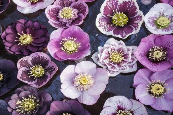 Conjunto de bellas flores color lila