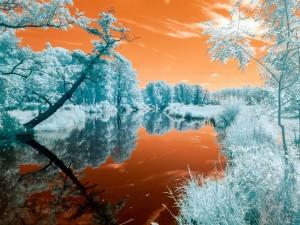 Postal: La magia de la naturaleza en invierno