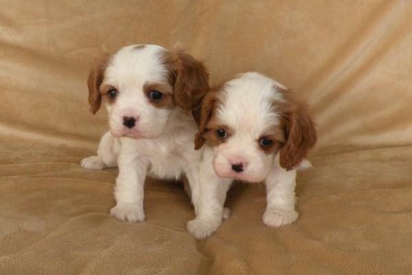 Dos tiernos y vistosos perritos