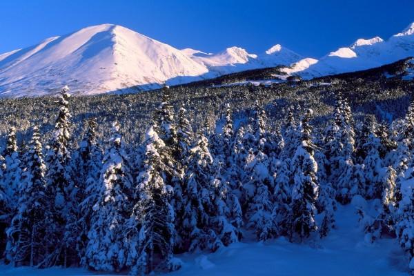 Un cielo azul sobre las montañas y pinos nevados