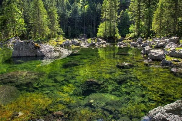 Plantas y rocas en el fondo del lago