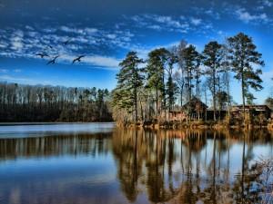 Postal: Casas entre los árboles junto al lago