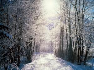 Postal: Carretera cubierta de nieve iluminada por el sol