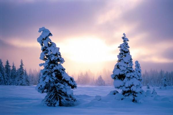 El sol entre dos abetos cubiertos de nieve
