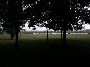 Árboles en la sombra