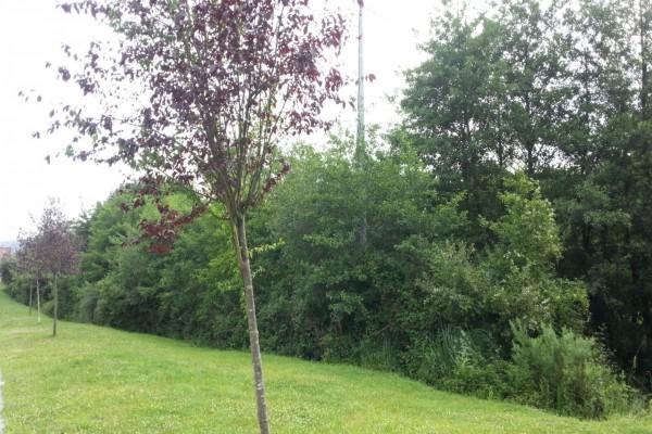 Árboles y arbustos en el prado verde